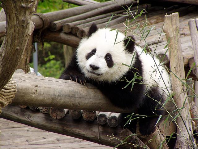 pandas for physics